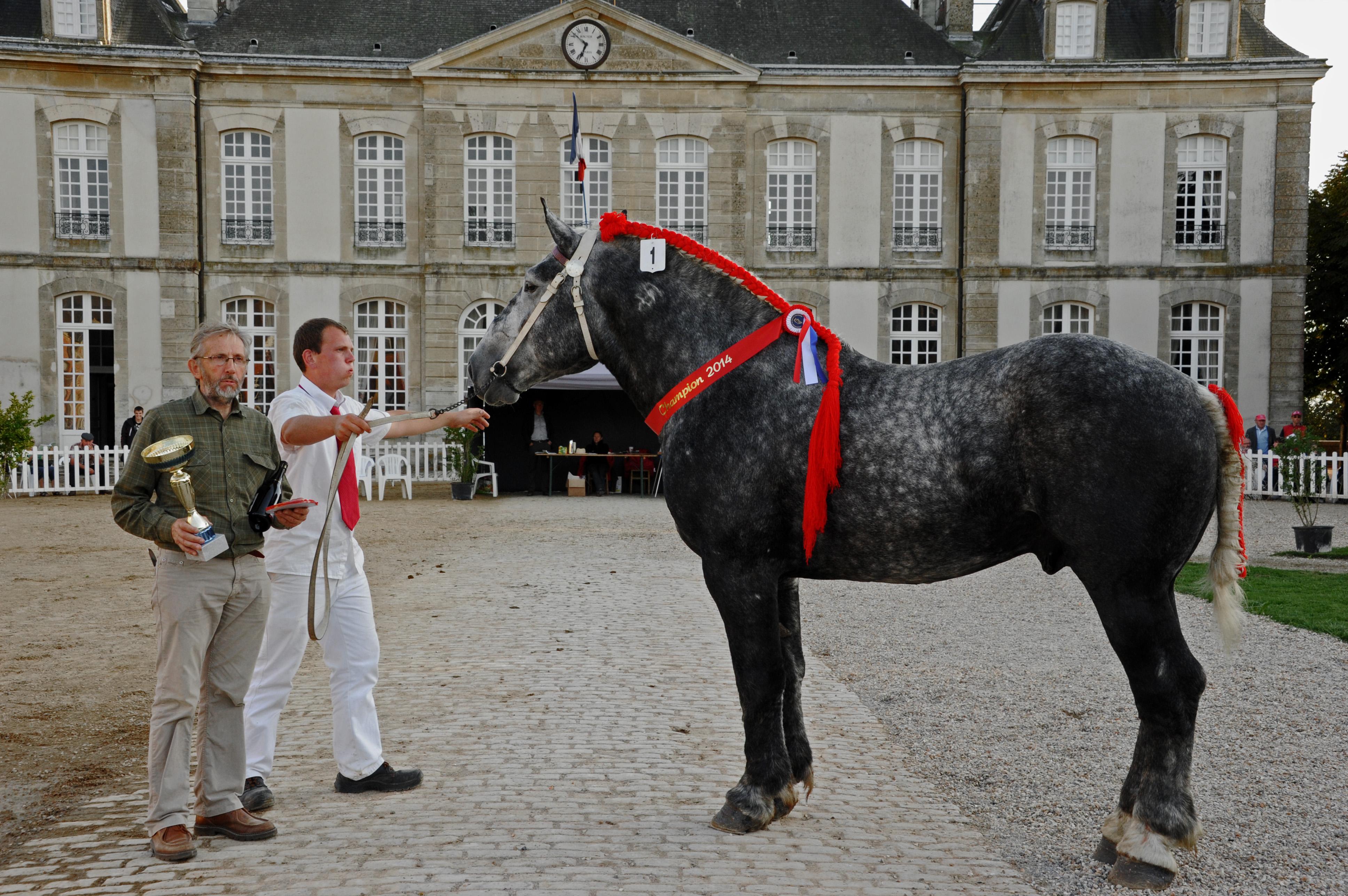 Liste des chevaux s lectionn s pour le salon de l - Salon de agriculture ...